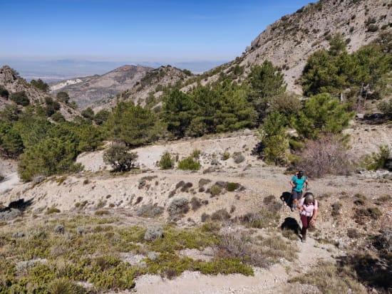 Emerging from the tree line in the Barranco de Rambla Seca