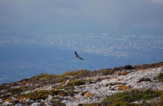 Wildlife in Mallorca