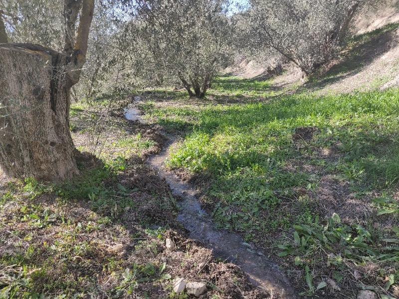 water irrigation 1