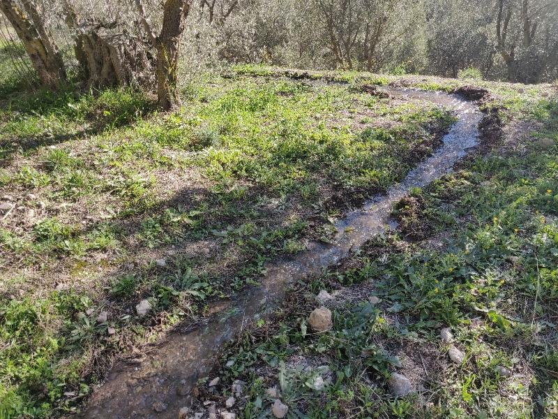 water irrigation 2