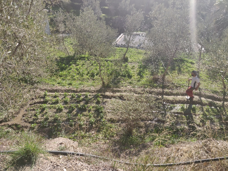 water irrigation 3