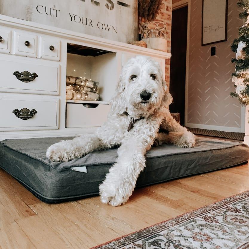 Large dog sitting on a dog bed