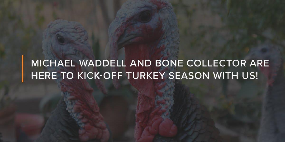 Close up of tom turkeys
