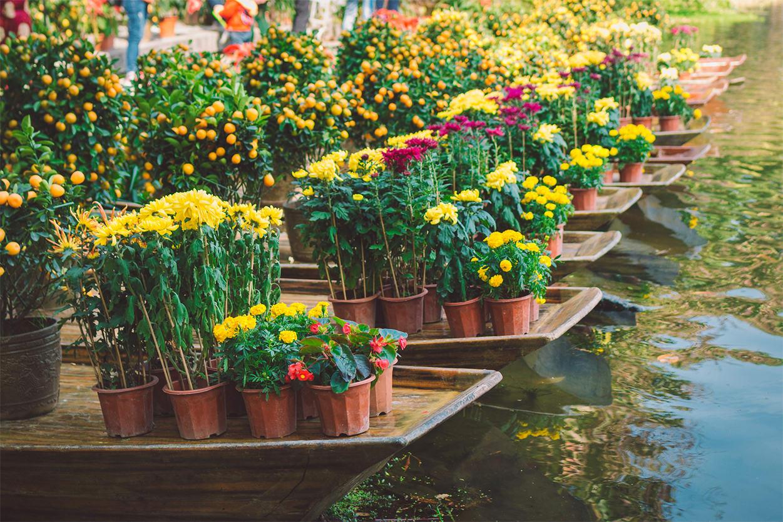 Water Flower Fair