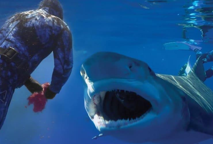man staring at a shark while diving