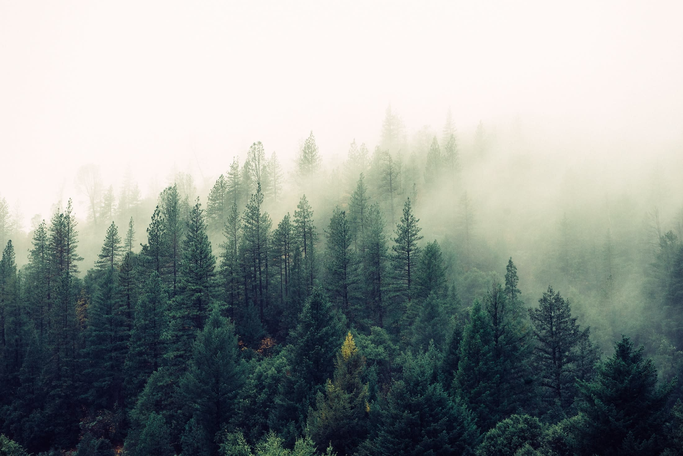 Forest with fog rolling in from unsplash.com, photographed by Jay Mantri.