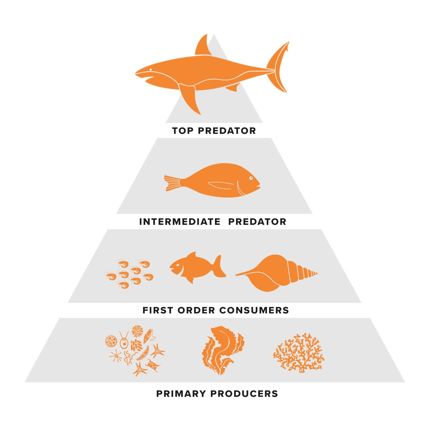 why are sharks important