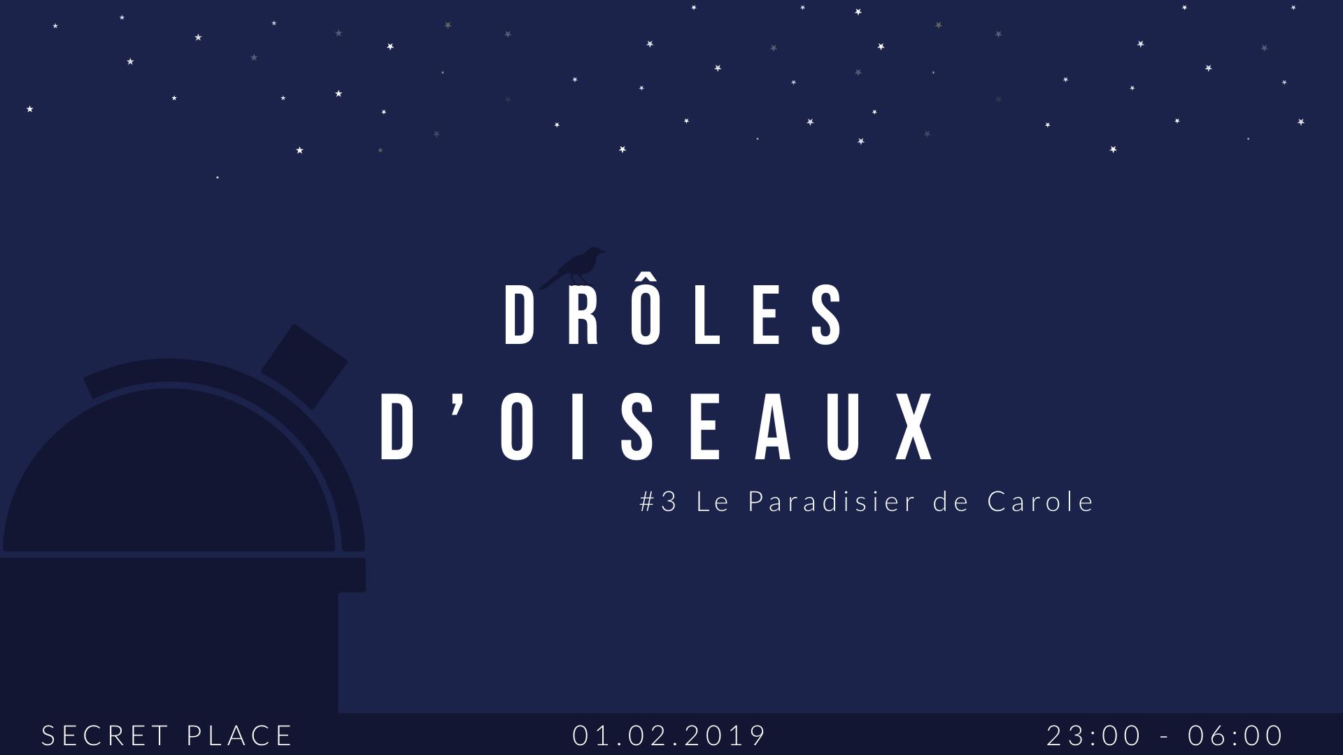 Drôles d'oiseaux #3 Le Paradisier de Carole