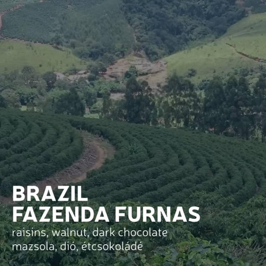 Fazenda Furnas   Awaken Coffee Roastery