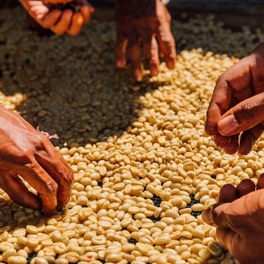 Eratoi | Clifton Coffee Roasters