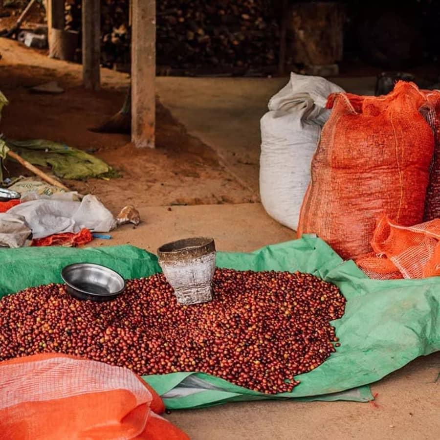 Ou Yang   Clifton Coffee Roasters
