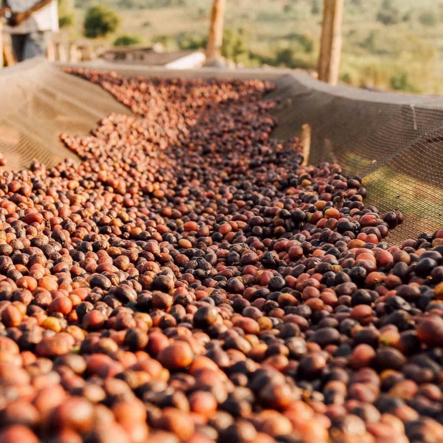 Kirundo Kayanza Cafex   Clifton Coffee Roasters