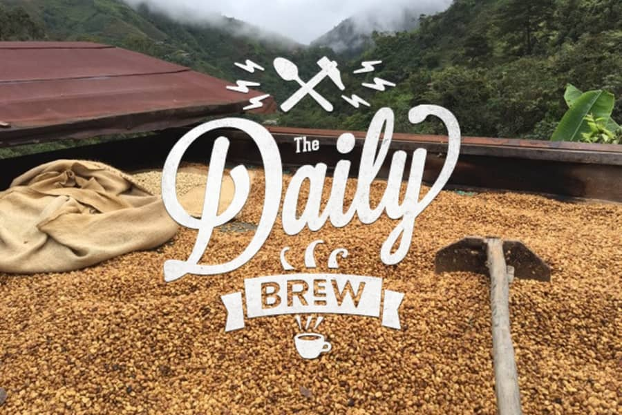 Daily Brew | Coffee Factory