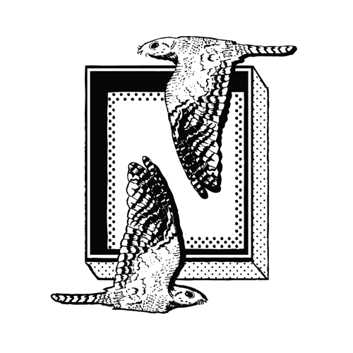 Nightjar Coffee logo
