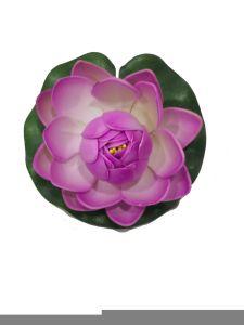 Gomaeva 10cm color lila