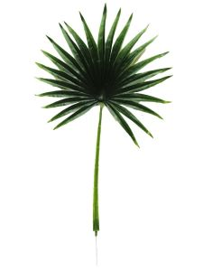 Planta color verde oscuro...