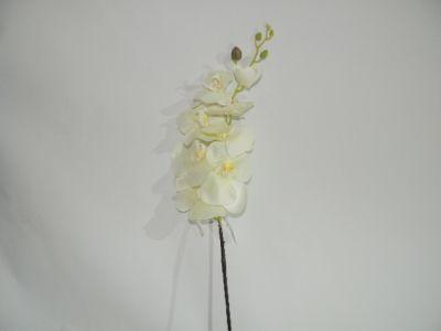 蝴蝶兰 全白 100cm