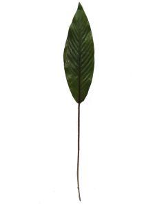 Hoja de planta 73cm color...