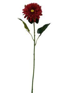 非洲菊 玫红 90cm _ Gerbera...