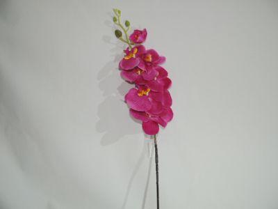 蝴蝶兰 深紫 100cm