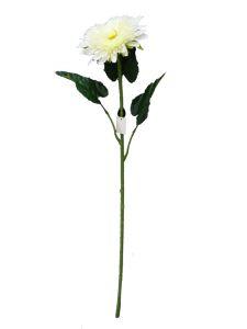 非洲菊 白 90cm _ Gerbera blanco...