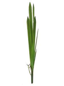 Hoja de planta delgada 70cm...