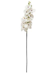 蝴蝶兰K7 全白100cm _ Orquídea...