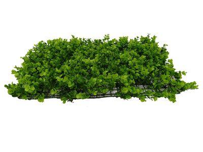 Plancha eucalipto grande...