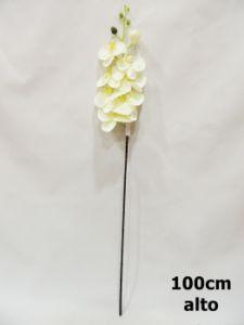 蝴蝶兰 白紫 100cm
