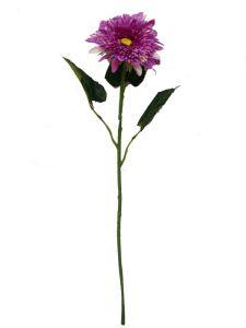 非洲菊 紫 90cm _ Gerbera...