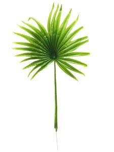 Planta color verde claro...