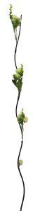 Flor seca 160cm color Beige