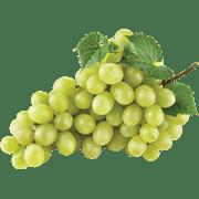 <!--begin:cleartext-->קנה ממגוון ענבים ב 15.90 ₪ לק''ג<!--end:cleartext-->