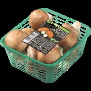 <!--begin:cleartext-->קנה 2 יחידות ממגוון מצוננים ירקות ופירות, קבל יחידה נוספת במתנה (הזול מביניהם)<!--end:cleartext-->