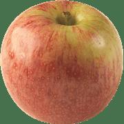 <!--begin:cleartext-->קנה ממגוון תפוח עץ יונתן קטיף ב 11.90 ₪ לק''ג<!--end:cleartext-->