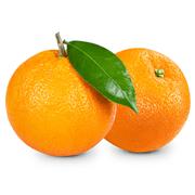 <!--begin:cleartext-->קנה ממגוון תפוזים קטיף ב 5.90 ₪ לק''ג<!--end:cleartext-->