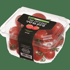 עגבניה שרי פינק מרטיני