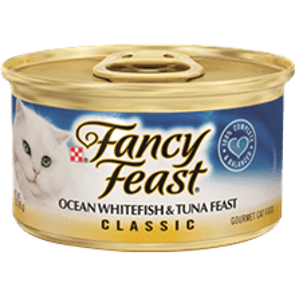 פנסי פיסט לח דג אוקיאנוס