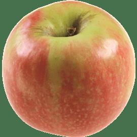 תפוח עץ פינקריספי