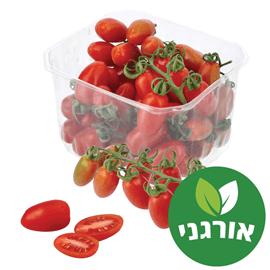 עגבנית שרי אורגנית