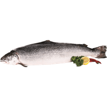 דג סלמון שלם טרי