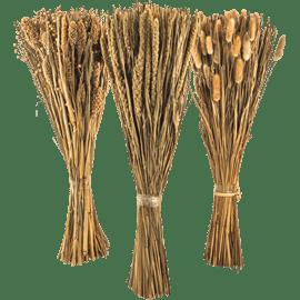 צמח מיובש