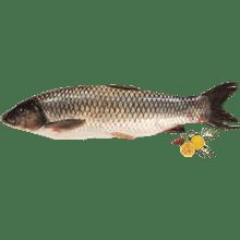 דג אמור שלם טרי