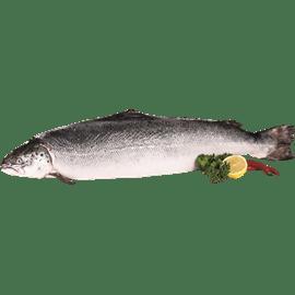 דג סלמון טרי 3-4