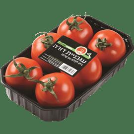 עגבניית דורה