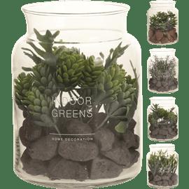 צמח ירוק בכוס זכוכית