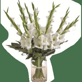 זר סייפנים 9 פרחים