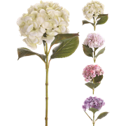פרח רומנס
