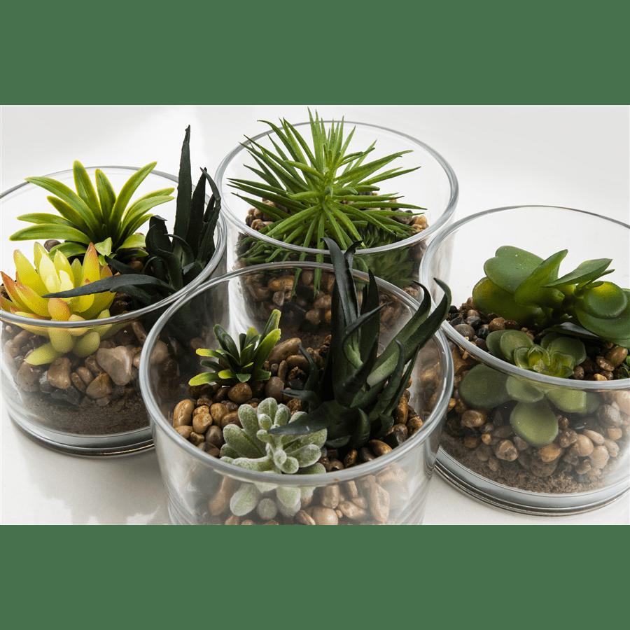 צמח ירוק בכלי זכוכית