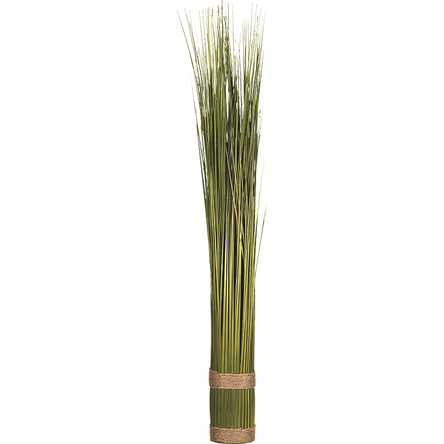 דשא דקורטיבי